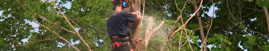 tree felling services newcastle